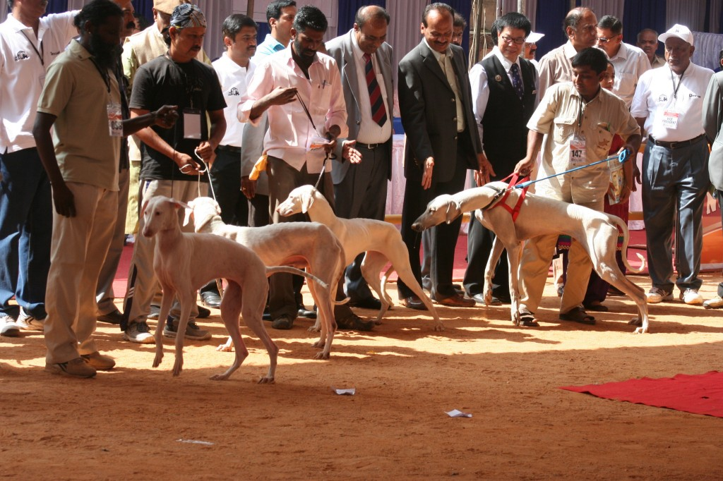 Indian Breeds Speciality Dog Show 2013 Society For