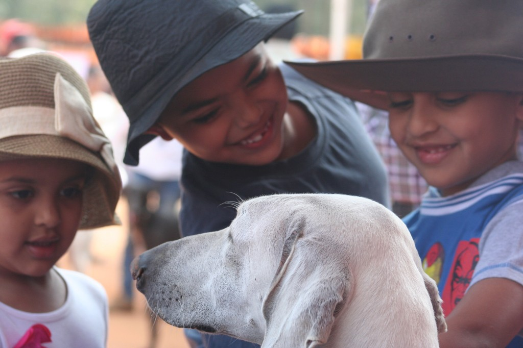 Hounds can be very gentle to even kids...
