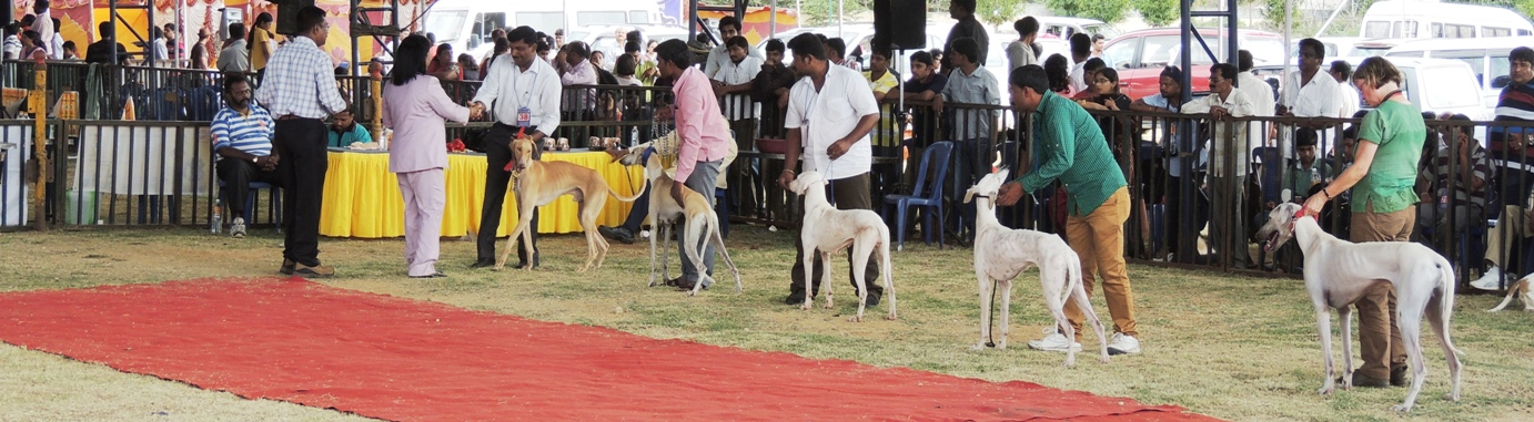 Mysore Kennel Club Show 2013